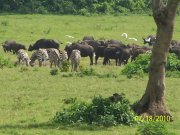 Game grazing in Arusha National Park
