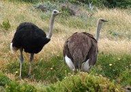 Ostriche3